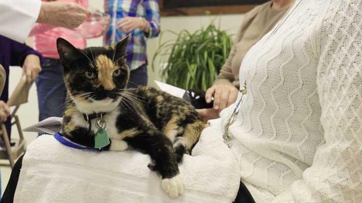 Ricorda di santificare i gatti